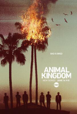 animal kingdom season 1 subtitles download